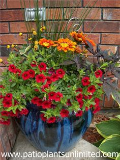 Container Garden: Red Callibrochoa; Orange Gazania with yellow Spilanthes on the left and Sweet Potato Vine (Ipomea) on the right