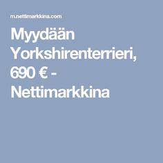 Myydään Yorkshirenterrieri, 690 € - Nettimarkkina