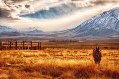 Bishop Ranch by Sean Scanlon
