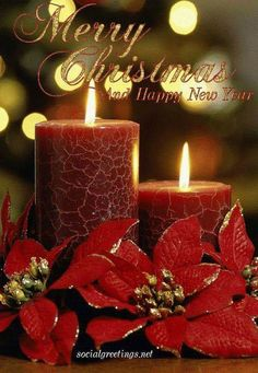 Merry Christmas Greetings Message, Merry Christmas Images Free, Merry Christmas Friends, Merry Christmas Card, Merry Christmas And Happy New Year, Christmas Time, Christmas Quotes, Christmas Scenery, Xmas