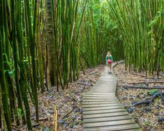 Photo by @andywcoleman // It is difficult to pinpoint the best part of the Pipiwai Trail in Haleakala National Park on Maui.  Is it the 400' Waimoku Falls at the end of the hike?  Perhaps it is the huge banyan tree with prop roots that form their own trunks. We quite liked the trail winding through the massive bamboo forest. The NPS even built these great walkways to help us through the muddy parts of the trail. by natgeotravel