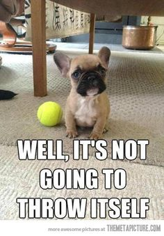 Well, you heard the pup!