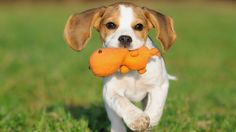 TIP: What are the five main types of dog toys, and how does each provide a different benefit to your pooch?