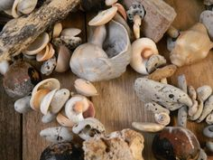 Beachy Garland Shells Grey Brown Cream Neutral Natural Organic Beach Wedding Bridal Ocean Tropical Holiday Christmas Tree Mantel Driftwood