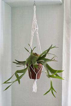 insideways - macrame plant hanger