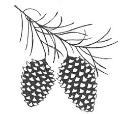 Pine Cone Branch- Stamp of the Month Dec. 2003 9.96