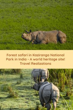 Kaziranga National Park and Tiger Reserve, is a world heritage site, is famous for its one-horned rhinoceroses. #Travel #Rhinocerose #Forest #Kaziranga #India #Forestsafari #IncredibleIndia #TravelInspiration
