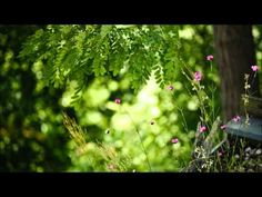 ▶ Abraham Hicks 2014 ペ To Get An Answer To Any Question - YouTube  (ClaireBear: there is so much in this one - I love it!)