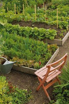 Raised bed vegetable garden -- beautiful