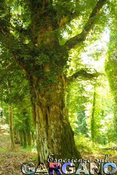 Foresta Umbra, Parco Nazionale del Gargano.  #ForestaUmbra #ParcoNazionaleDelGargano #EsperienzeGargano #MyGarganoExperience #Gargano #Puglia #Natura #relax #animali #nature #apulia #animal #world #travelexperiences #travel #travelblogger #vacation #traveling