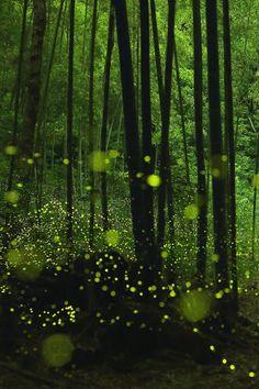 Wild Dance of Golden Fairies by yume