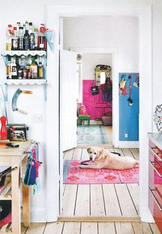 doggy in a colorful home rice