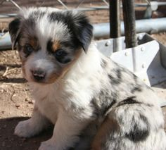 i already have 2 dogs, but i would love to have this one <3