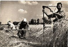 Aratás Bogyoszlón az 1940-es években.