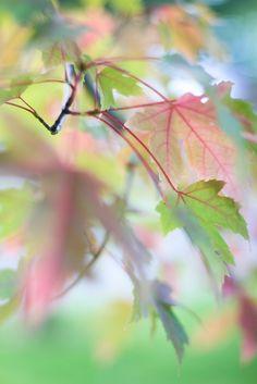 """Miks' Pics """"Trees l"""" board @ http://www.pinterest.com/msmgish/trees-l/"""