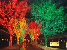 Holiday Light Show Spectacular | On Anna's Plate