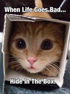 Hide in the box...