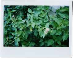 Seven Remedies: Instax Diaries #7 | Lomo'Instant Wide with Instax Wide Film