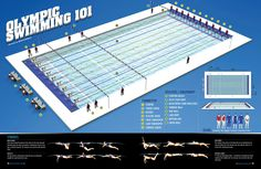 olympic swimming 101 great infographic which explains the different staff and equipment present during olympic swimming events - Olympic Swimming Pool Diagram