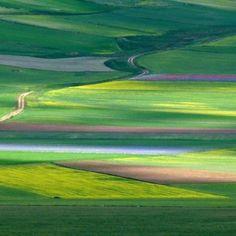 """""""fiorita"""" a Castelluccio di Norcia, Province of Perugia , Umbria region. Italy"""