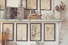 Framed pressed flowers.