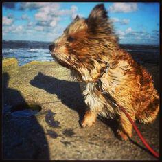 Arie jr at pier Wijk aan Zee