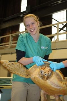 Nat'l Volunteer Week 2013: By the #s  180 volunteers donated their time and skills to help rehabilitate sea turtles during this record-breaking season—for a total of 11,805 hours!
