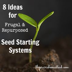 frugal seed starting pots
