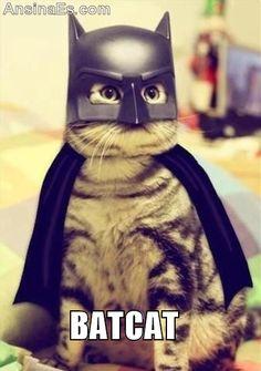 Fotos chistosas - BatCat gato disfrazado de Batman