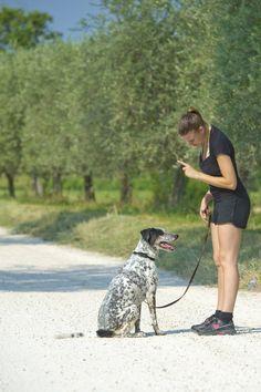 Suivez nos conseils pour apprendre facilement et rapidement à votre chien à ne pas bouger quand vous lui en donnez l'ordre !