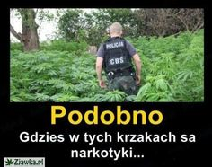 . Polish Memes, Weekend Humor, Funny Mems, Quality Memes, Wtf Funny, Reaction Pictures, Best Memes, Funny Images, Kuroko