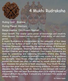 4 Mukhi Rudraksha..