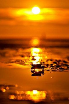 golden afternoon - sea and crab