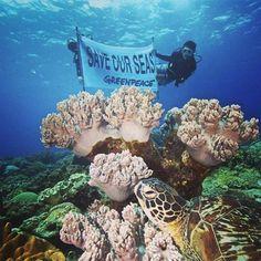 """Greenpeace comparte imágenes de varios científicos de la universidad de Silliman, miembros de la organización ecologista, de la comunidad de la isla Apo que muestran una pancarta en el Área Marina Protegida de la isla de Apo, que quedó dañada tras el tifón """"Bopha"""" en el año 2012 de Filipinas. Foto: EFE"""