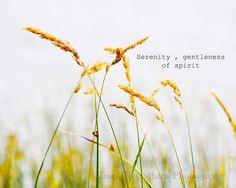 . Summer Beach Quotes, Beach Grass, Sight & Sound, Nature Quotes, Paint Party, Serenity, Fine Art America, Fine Art Prints, Wall Art