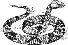 snake sketch | Copperhead Snake clip art - vector clip art online, royalty free ...