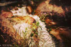 """""""Independente da estação do ano, há sempre uma flor na paisagem.""""  #vickyphotos #flor #viscondedemaua #maua #vilademaringa #maringa @vicky_photos_infantis https://www.facebook.com/vickyphotosinfantis http://websta.me/n/vicky_photos_infantis https://www.pinterest.com/vickydfay https://www.flickr.com/vickyphotosinfantis"""