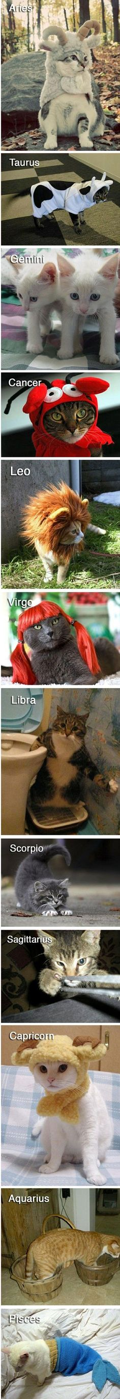 The twelve cats of the Zodiac...lol