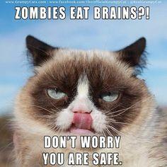 Funny grumpy cat quotes, grumpy cat funny, funny grumpy cat, grouchy cat, grouchy quotes …For more hilarious humor and funny pics visit www.bestfunnyjokes4u.com