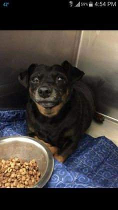 12/2015***Shy at first, but once she warms up she's your best friend.Beauty is an adorable mini dachshund/rat terrier mix. She loves to bounce and dance around when she's excited to see you. She is very affectionate and loving, but is wary of strangers. She...