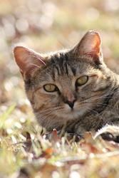Pinball is an adoptable Tabby - Brown Cat in Monroe, NC. Hi, my name is Pinball & I am one of 3 babies born from a stray tortoiseshell momma cat that showed up in my caregiver's backyard in Nov. 2011....