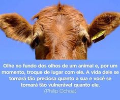 Animals And Pets, Cute Animals, Vida Animal, Vegan Books, Vida Natural, Vegan Quotes, Animal Help, Crazy Life, Little Memes