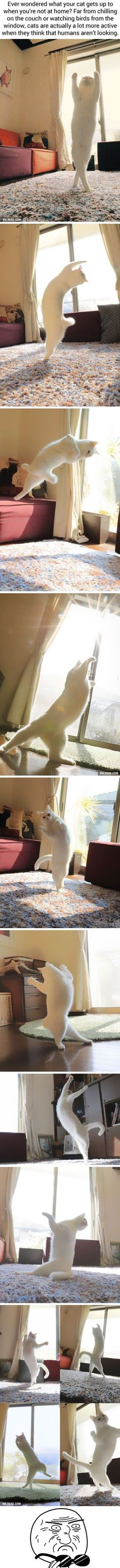 Viral pictures of the day: Ballet Cat Dances Like Nobody's Watching