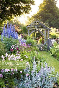 Roses David Austin, David Austin Rosen, Delphinium, Cottage Garden Plants, Cottage Garden Borders, French Cottage Garden, Back Gardens, Outdoor Gardens, English Garden Design