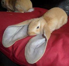 artistpix 이 collection animal lapin rabbit coniglio conejo kaninchen Cute Funny Animals, Cute Baby Animals, Funny Cute, Animals And Pets, Cute Creatures, Beautiful Creatures, Animals Beautiful, Photo Animaliere, Amor Animal
