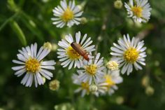 the flowers and the bug...=]
