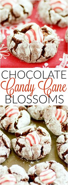 Chocolate Crinkle Candy Cane Kiss Cookies www.somethingswan Chocolate Crinkle Candy Cane Kiss Cookies www. Kiss Cookie Recipe, Kisses Recipe, Cookie Recipes, Dessert Recipes, Candy Cane Cookies, Kiss Cookies, Cookies Et Biscuits, Candy Canes, Blossom Cookies