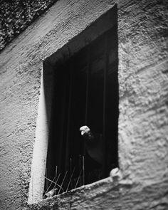 black and white  Schwarz und weiß ist das was ich an der Fotografie liebe. Keine Farben die einen vom wesentlichen Ablenken :) _______________________________________________________ #instagoodmyphoto #2instagoodportraitlove #justgoshoot #exploretocreate #peoplescreatives #passionpassport #my_365 #theoutbound #austrianblogger #blogger_at #blogging #blogger #igersvienna #wien #igersaustria #behappy #vienna #analouge #canon #shotonfilm #lomography #enjoy  #enjoylive #igers #fadedcolours…