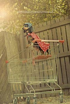 Creative Pet Photography by Serenah, New Zealand-born, Australia-based photographer