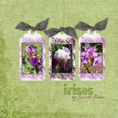 Irises Digital Scrapbooking Layout by Jan Hicks
